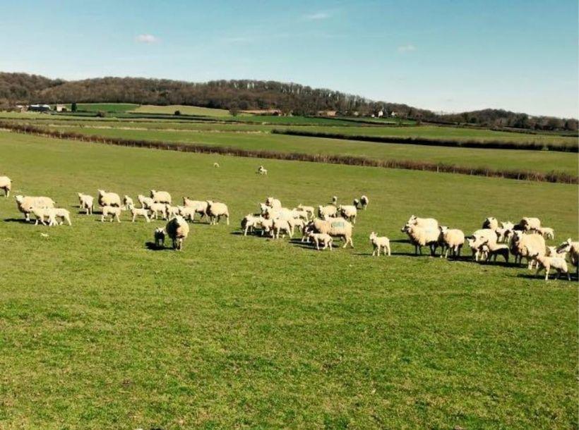Farmhouse Kitchen Yorkshire Tv Dvd: Woodlands Views, Pontypinna Farm, Golden Valley, Caravan
